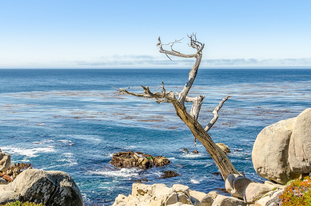 Lone Cypress Neighbor